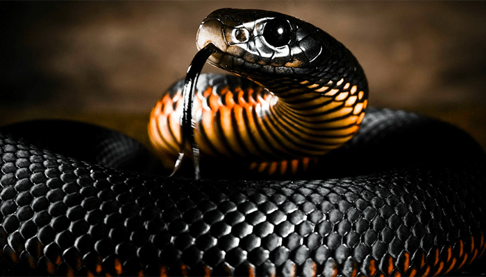 Люцифер - змей искуситель